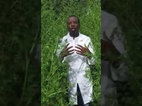 Parcours du jeune docteur congolais à l'origine du covid-organics; cette tisane qui guérit les malades atteints du covid-19