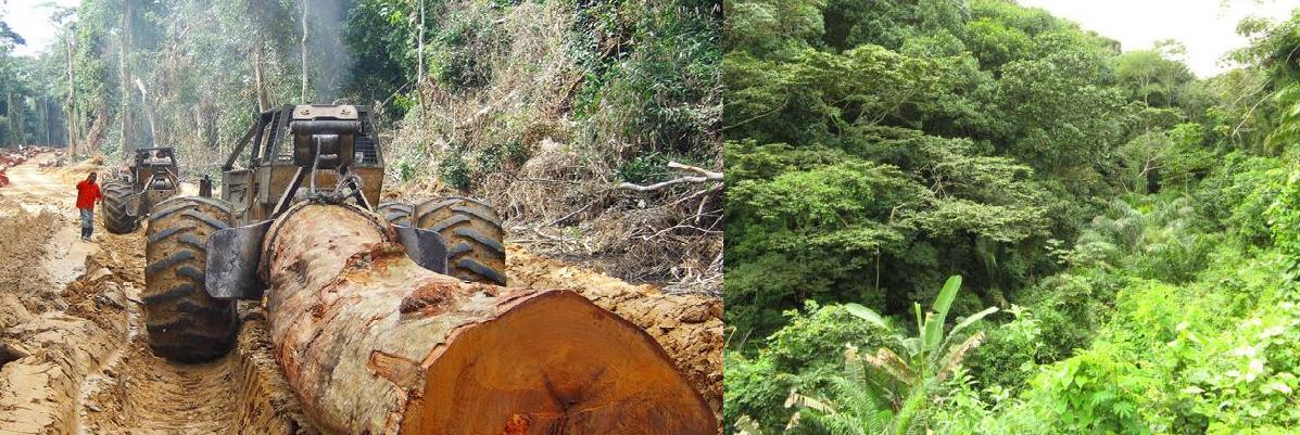 Plaidoyer contre la déforestation